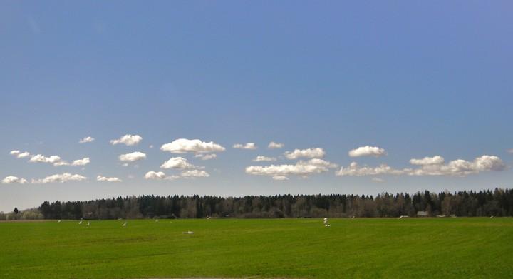Lamedad ja räbaldanud rünkpilved - Cumulus humilis fractus(Cu hum, fr) (foto: Koidula Kliimann, 2012)