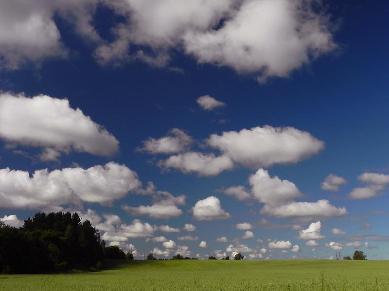 Lamedad ja räbaldunud rünkpilved (Cu hum, fr) (foto: Ain Avik, 2012)