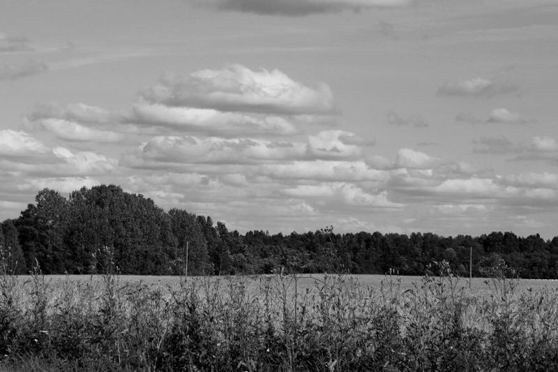 Lamedad ja räbaldunud rünkpilved - Cumulus humilis ja fractus (Cu hum, fra) (foto: Ülle Kütsen, 2013)