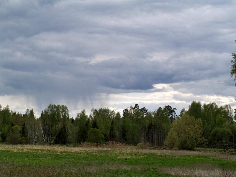 Sajused kihtrünkpilved - Stratocumulus praecipitatio (Sc pra) (foto: Ülle Mürksepp, 2012)
